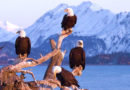 things to do in homer alaska
