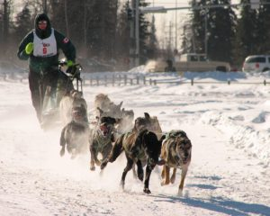iditarod-dog-sled-race